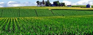 syngenta-corn-lawsuit-lawyer-nebraska-iowa-south-dakota