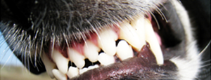 dog-bite-lawyer-omaha